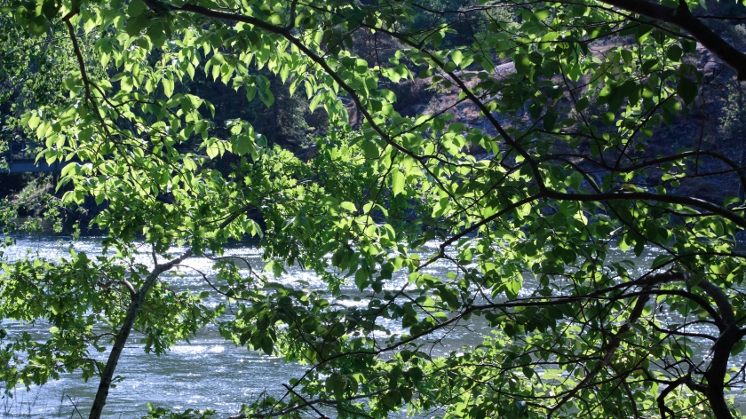 Riverside branches